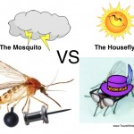 Mosquito and Housefly